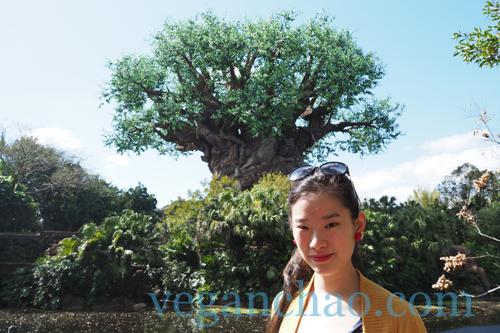 Mr. Kamal's Disney World Tree of Life